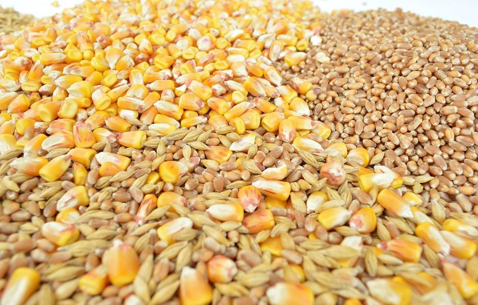 grains-940